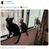 「ニャン生」の大先輩と 愛猫そろい踏みのスリーショット