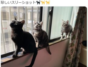 愛猫のスリーショット写真がTwitterで話題。