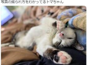 写真慣れした?猫ちゃんがTwitterに出現。