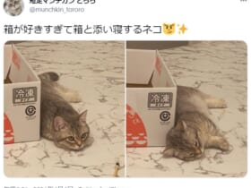箱が好きすぎて添い寝をしてしまった子猫ちゃんの姿が話題。
