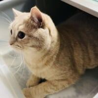 猫のいるお家「衣替えあるある」 気づけばすでに衣…