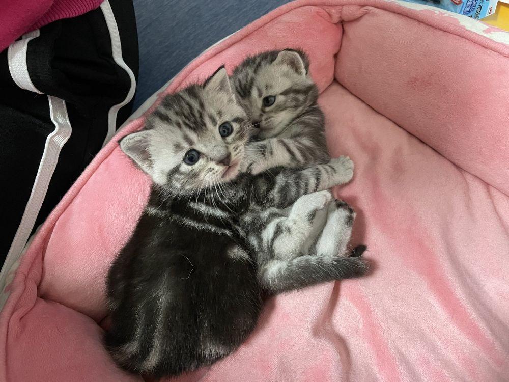 くぅちゃんとリクくんは夫婦猫。先日くぅちゃんはリクくんとの子を出産。