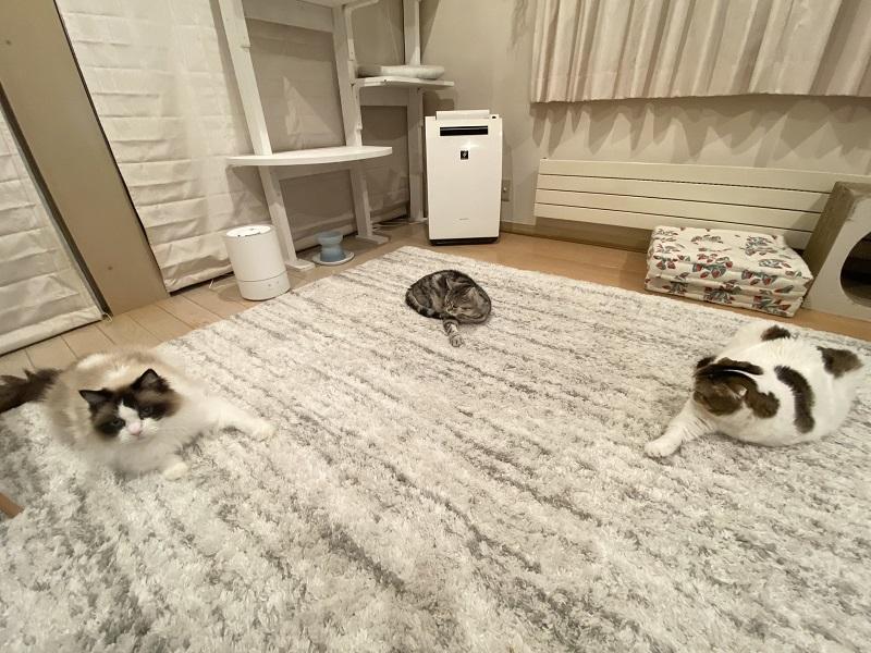 ひまわりちゃん、たんぽぽくん、どんぐりくんの3匹が寝転がっている