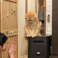 しょんぼり……全身から落ち込み伝わる凹み中の猫さん