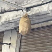 簡単にできる「蜂の巣」予防 効果はあるも「生首みたい」の声