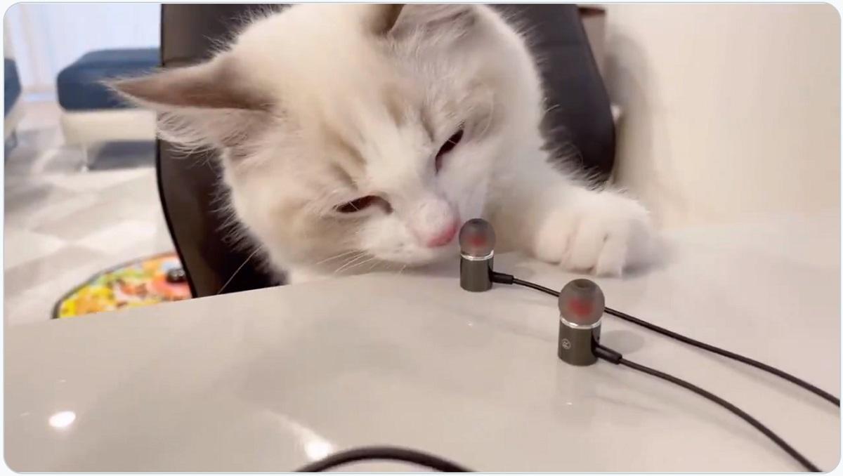 ショック?愛猫が自分のイヤホンをかいで「くさっ!」の反応