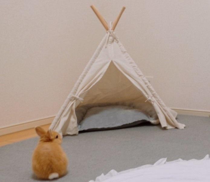 ペット用テント