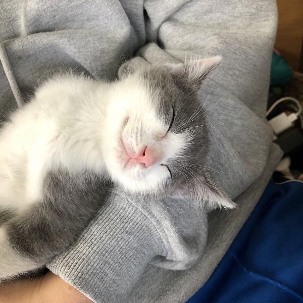 腕の中で眠ったくうすけくん