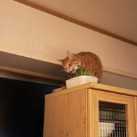 豆苗の隠し場所を探し当てた名探偵猫 ニャーロック…