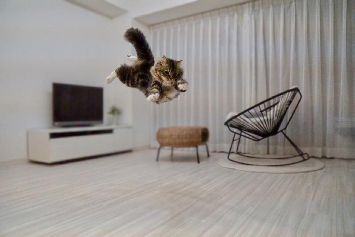 正義の味方「スーパーニャン」参上 愛猫の決定的瞬間を撮影