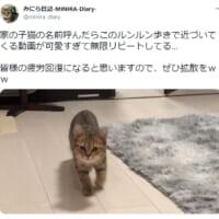 まるでアニメのワンシーン? ルンルン歩きする子猫