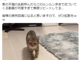 まるでアニメのワンシーン?ルンルン歩きを見事に再現した子猫の動画が話題