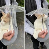 おさんぽ大好き猫の「雨の日スタイル」に25万いいね