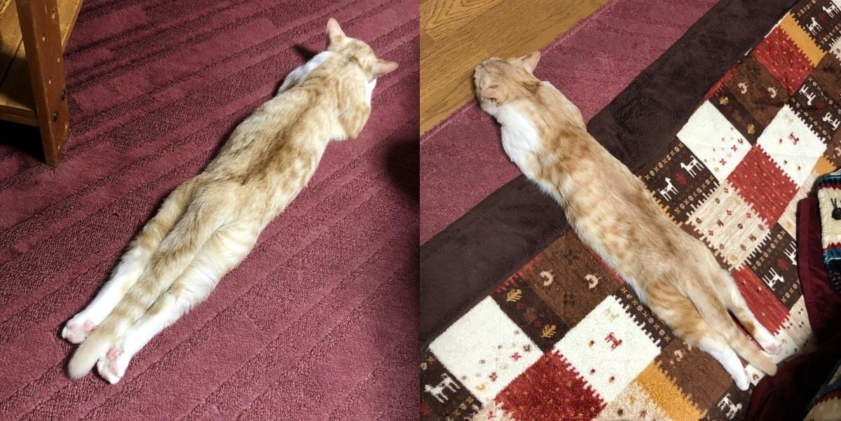 ちくわ?ポッキー?リラックスした姿が食べ物に見える猫