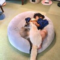 起こせない?フワフワ「ねこ布団」で気持ち良さそうに眠る男の子