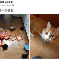 食器を割るなど罪をかさねる愛猫 でも可愛いから無罪