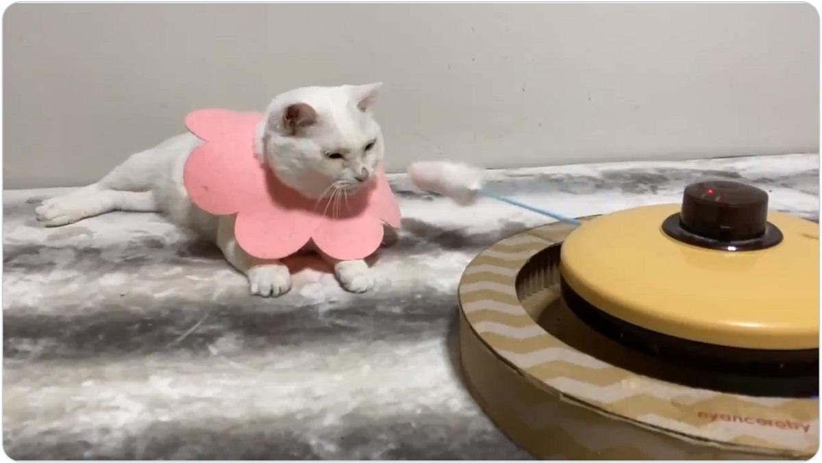 猫じゃらしをまったく無視 ノーリアクションな猫に飼い主「ちょっとは猫らしくしたらどう?」