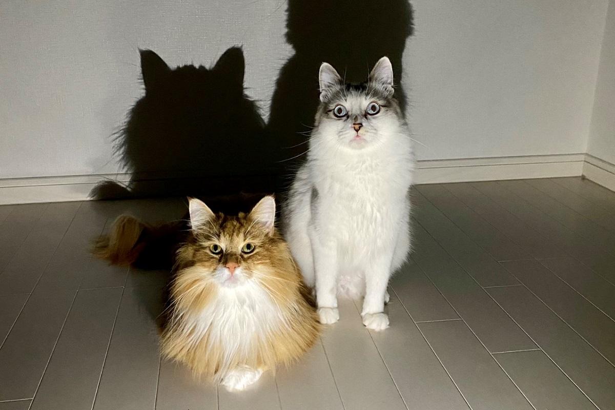 愛猫を病院に連れて行った結果 「この恨みはらさでおくべきか」