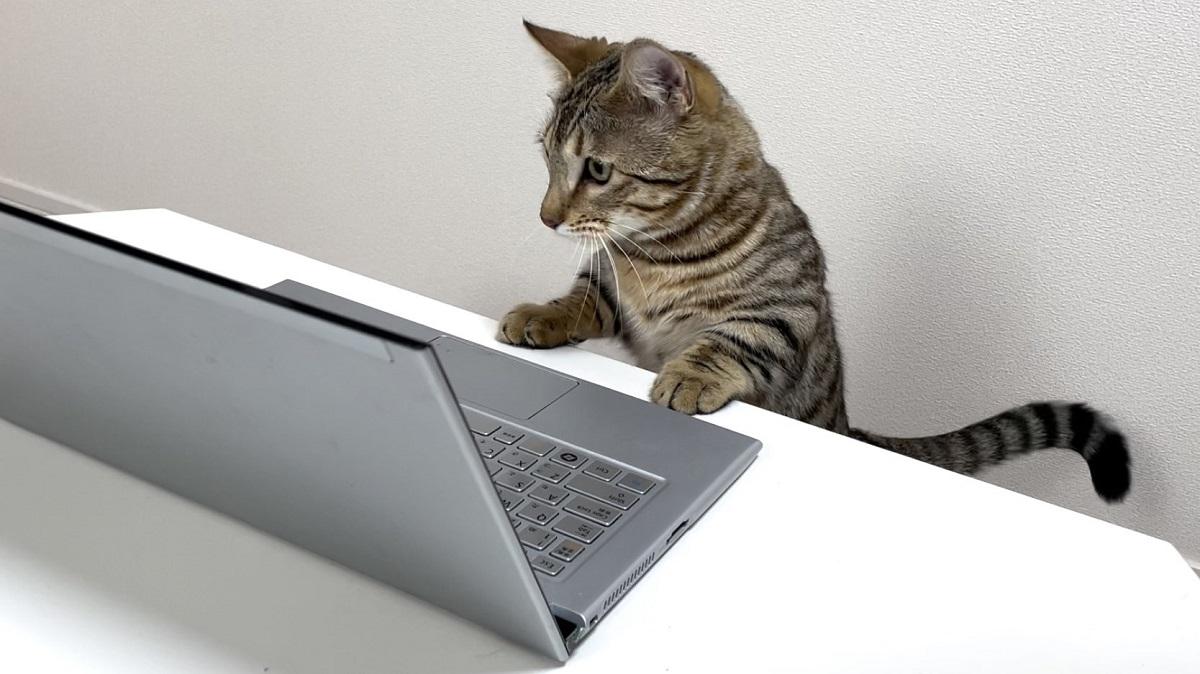 オンライン会議に参加した猫 良い案が出るかも?