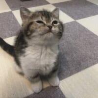 「爪切るよっ」て言われた時の猫のしかめっ面が話題 本当に嫌そう……