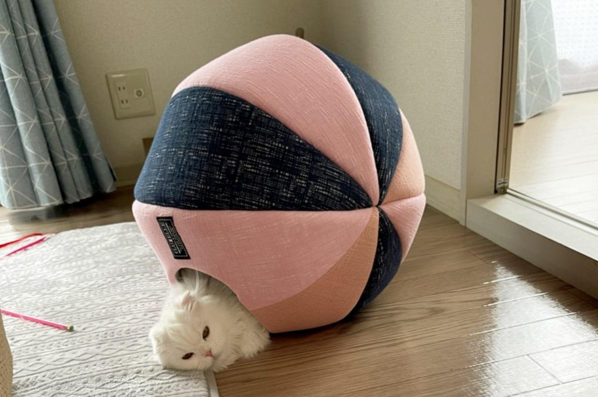 ボール型のベッドが気に入りすぎて巨大ヤドカリになってしまった猫