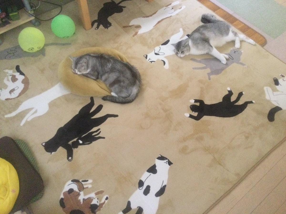 猫柄のラグに溶け込む猫 「踏んづけちゃいそうで怖い」