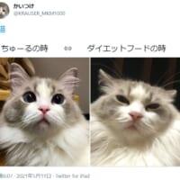 ちゅ~る→喜 ダイエットフード→不満 露骨に表情を変える猫さん