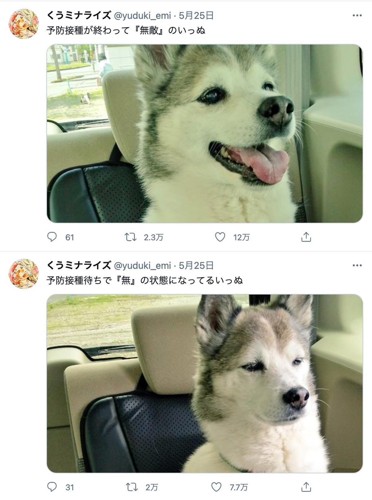 予防接種の前と後 犬の表情ギャップで心境まる分かり