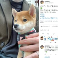 早く自分の足で散歩したいね 飼い主に抱っこされている豆柴が尊い