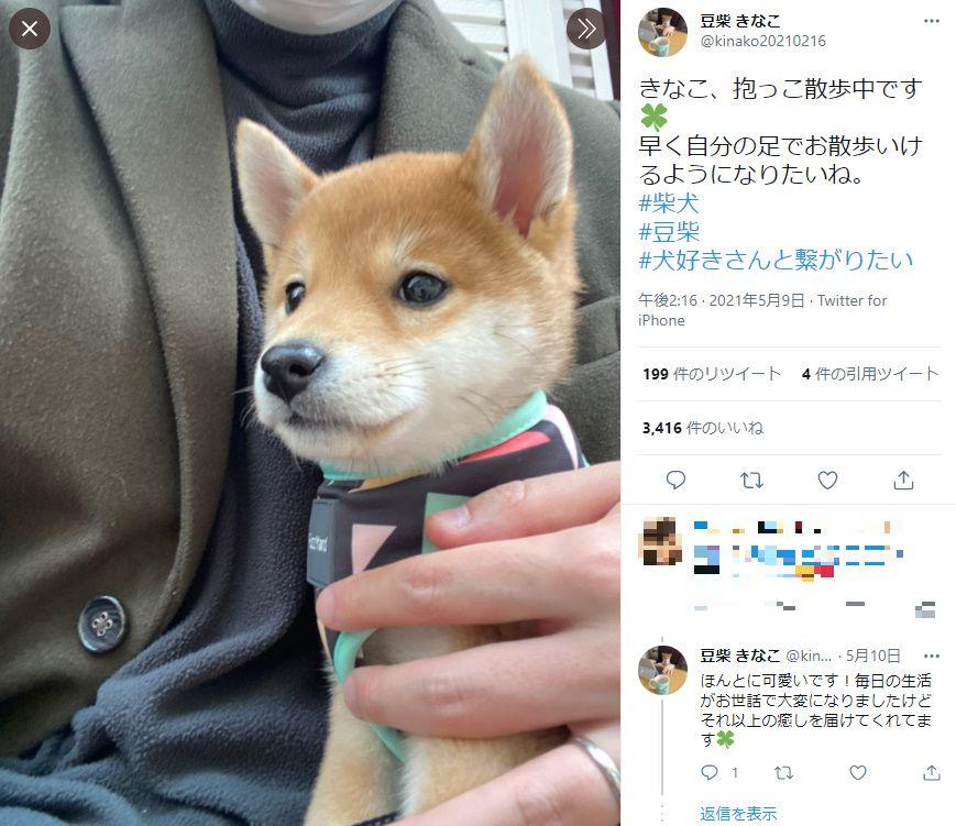 愛犬と抱っこ散歩している最中の投稿がTwitterで話題。