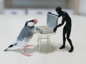 闇トリ引中の愛鳥の姿を激写。Twitterで話題に。
