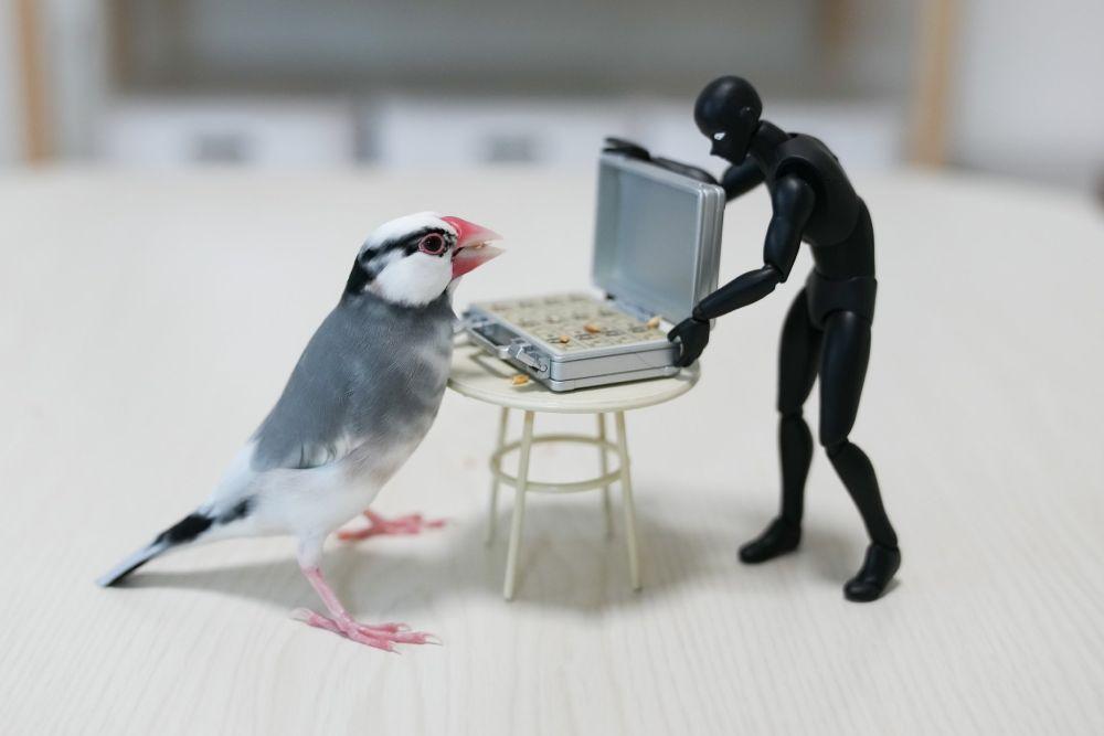 これがホントの闇トリ引? 愛鳥の犯行現場を激写