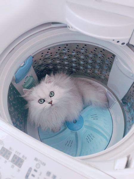 洗濯機の中にミミちゃん。