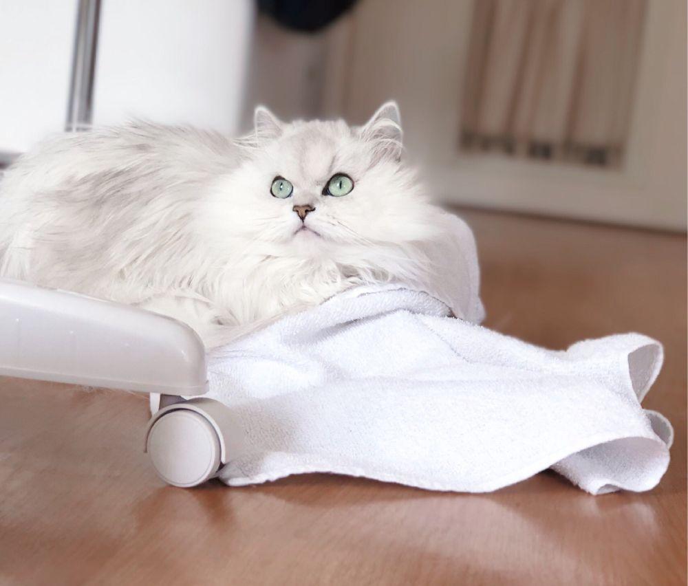 洗濯物を叩いてしまうミミちゃん。