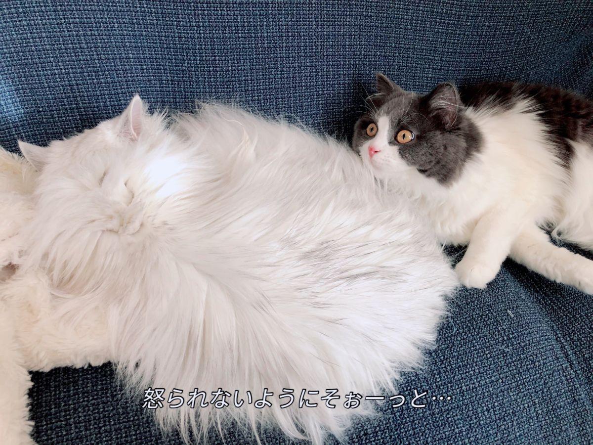 結婚後、飼い始めたというモモちゃんもミミちゃんLOVEな猫ちゃん。