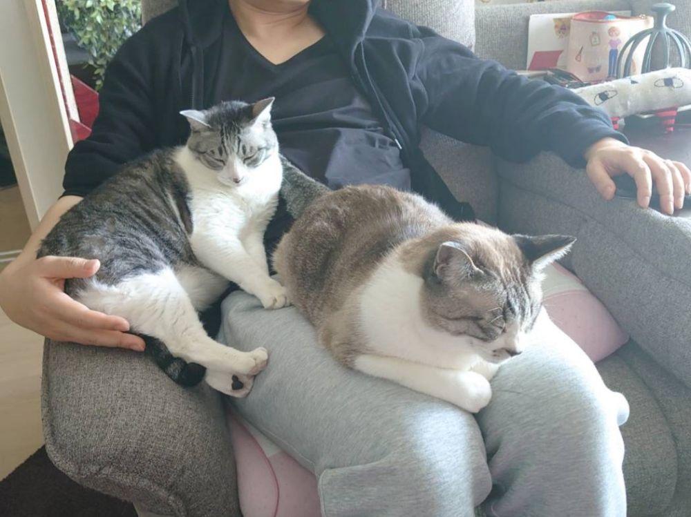 折角の晴天なので、外出しようとした矢先にやってきたという愛猫のもいもいくんとシップくん兄弟。