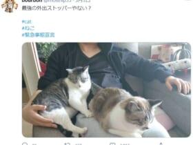 飼い主に「今年のGWはステイホームですニャ」と諭す?愛猫の姿がTwitterで話題に。