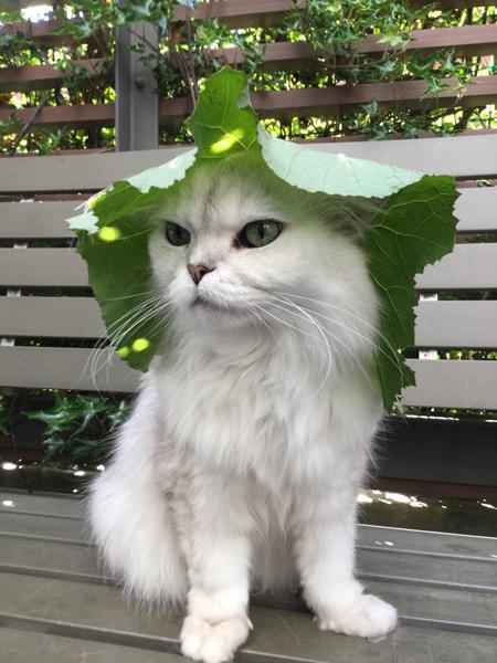 フキの葉帽子をかぶったロビーくん(こげめさん提供)