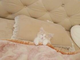 ベッドを完璧に使いこなす子猫が話題に。