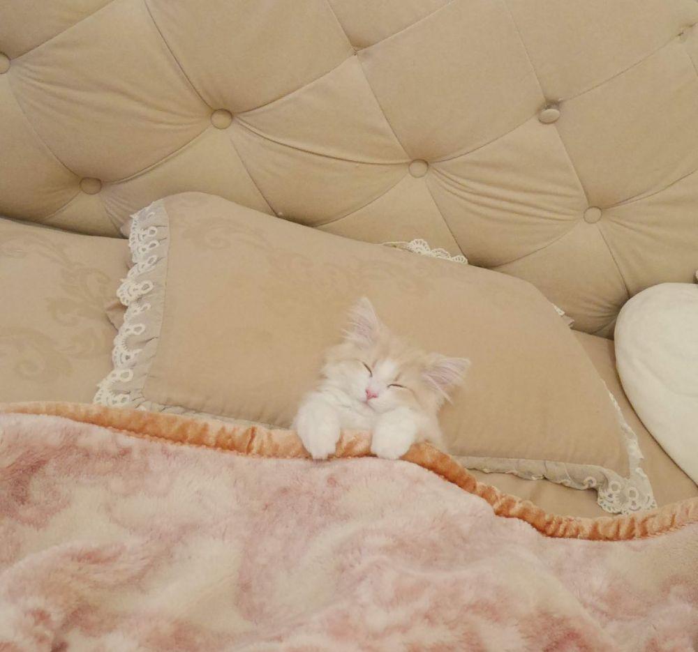 人間かな? 器用にベッドを使いこなす子猫