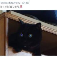 タンスの中からひょっこり出てきた「まっくろくろすけ」な黒猫