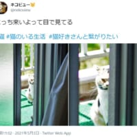 「こっち来いよ」アピールが独特な猫 顔半分のぞかせ飼い主を「じー」