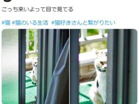 ベランダの外から見せる愛猫の眼光鋭い視線が話題。