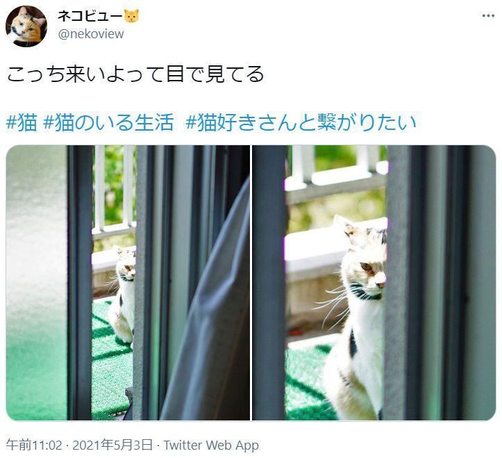 「こっち来いよ」アピールが独特な猫 顔半分のぞかせ飼い主を「じー」