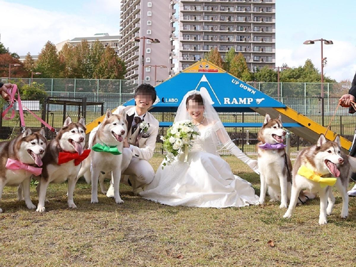 画像提供:30代夫婦とハスキー犬のいる暮らしさん(@VivienneHusky)