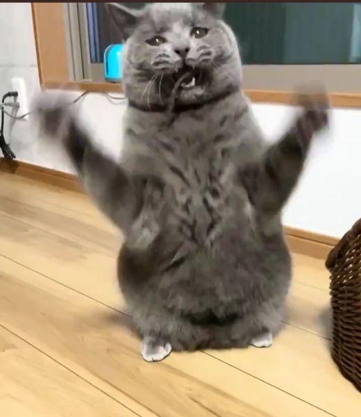 RPGのモンスター?「ネコがあらわれた!」っぽい愛猫の姿を激写