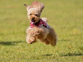 躍動感あふれる愛犬を写した写真がTwitterに投稿される。