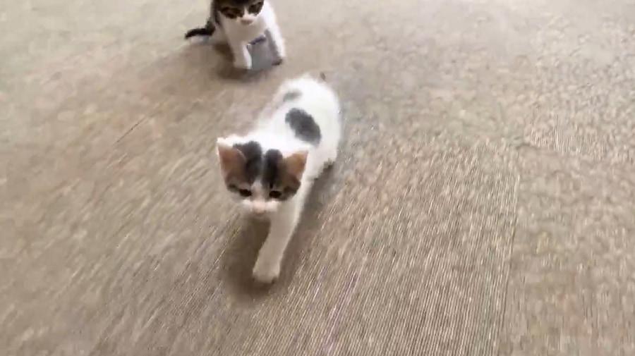 途中からもう一匹の子猫も追従
