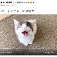 無垢な子猫の「ニャー!(遊んで)」の破壊力 尊すぎて拝みたく…