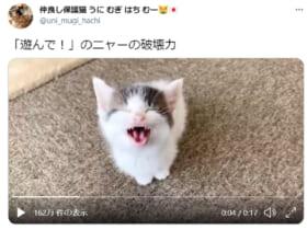 遊んでニャー!かわいい子猫の動画に尊死(とうとし)続出